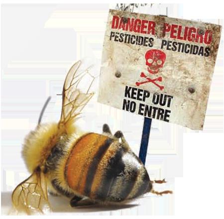 معمای مرگ زنبورهای عسل
